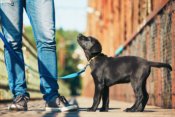 Puppy Training at Waggin' Tails Ranch